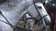 Stock Video Footage of Horses, Farm Animals, Equine