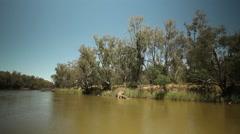 Murray River Australia 20 Stock Footage