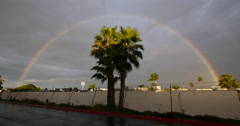 Complete Rainbow with a Palmtree Stock Footage