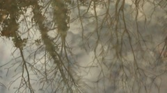 Trees reflected on water Stock Footage