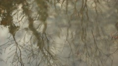Trees reflected on water in autumn Stock Footage