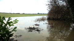Flooded field of crops Stock Footage