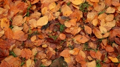 Golden autumn foliage background, autumn leaves carpet Stock Footage