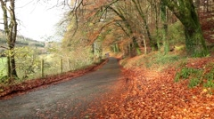 Amazing autumn rural road full of golden leaves Stock Footage