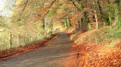 Autumn leave in beautiful rural road, fall season Stock Footage