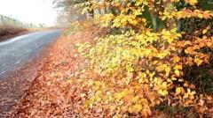 Autumn background golden leaves fall season - stock footage