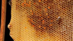 Frame with bee honeycombs filled with honey, and bees Stock Footage