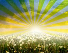 Stock Illustration of Meadow of dandelions with sun rays