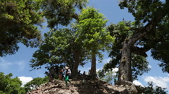 Tourists walking down a hill with tree Stock Footage