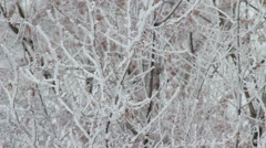 Winter Tree Branch In Snow HD Stock Footage