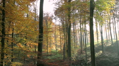 Autumn in the forest. Stock Footage