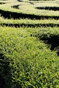 labyrinth maze - stock photo