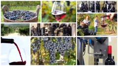 winemaking montage - stock footage