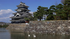 Swans in the Moat of Matsumoto Castle in Nagano, Japan Stock Footage