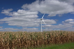 Windmill in corn field - stock footage