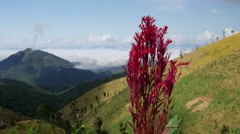 Mountains in North Thailand with a purple flower Stock Footage