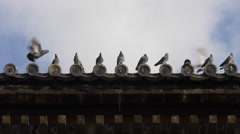 Pigeons on Roof at Toji Temple in Kyoto, Japan Stock Footage