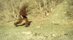 4K Bigfoot Caught on Film Stock Footage
