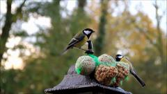 Feeding birds, bird feed, tit, nuts and fat ball Stock Footage