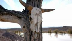 Stock Video Footage of Cow Skull on Wild West Ranch Landscape HD 1080p