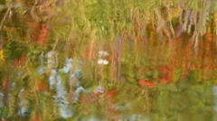 Colorful plants reflections with butterfly on water surface 4 Stock Footage