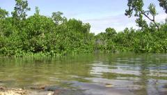 (timelapse) Jungle Swamp Marsh Ocean Area Stock Footage