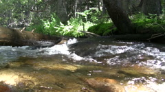 (timelapse) Tree Blocking Mountain Creek Flow Stock Footage