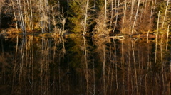 Bare Trees Reflected In Still Water, Olympic National Park, 4K, UHD Stock Footage