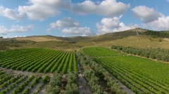 Fly over over vineyard and olive grove, Israel Stock Footage