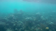 Underwater Scenes of Turks and Caicos (4 of 6) Stock Footage