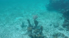 Underwater Scenes of Turks and Caicos (6 of 6) Stock Footage