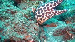 Honeycomb Moray Eel.m2ts Stock Footage