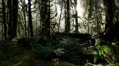 Hoh Rainforest, Rain Forest, Olympic National Park, 4K, UHD Stock Footage