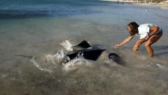 Large stingray being fed in Southern Australia Stock Footage