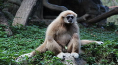 Monkey in the forest Stock Footage