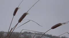 Reed dry river, winter, HD Stock Footage