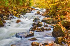 river in algonquin park in ontario, canada. - stock photo