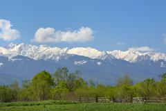 Alpine landscape with green meadow and snowed white mountains behind Stock Photos