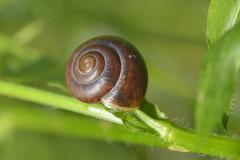 small brown snail on a green grass - stock photo