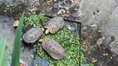 Turtle eating Stock Footage