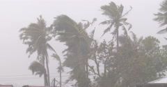 Palm Trees Thrash And Sway In Strong Hurricane Wind - stock footage