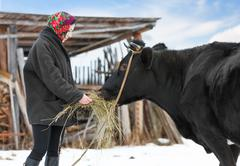 rancher in casual  winter clothesin  stands  with cow - stock photo