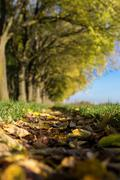 The walls of ferrara during autumn with fallen leaves on the ground Stock Photos