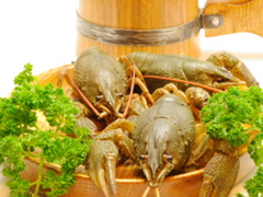 Crayfish and wooden beer mug. Related clips are in my portfolio in 1920x1080. Stock Footage