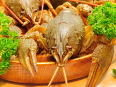 Crayfish and beer. Related clips are in my portfolio in 1920x1080. Stock Footage