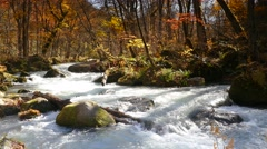Oirase river at fall, Japan Stock Footage