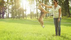 Young woman plays with his beagle Dog friend - stock footage