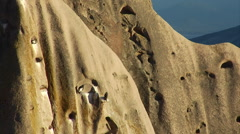 Andean Condors - Three Condors perched on a Cliff Stock Footage