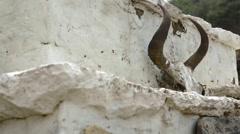 Nepal Himalayas A yak skull sits on a Stupa in Namche Bazarre. Solukhumbu remote Stock Footage