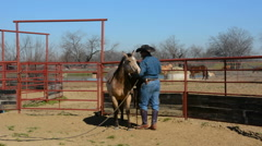Dallas Texas Tate Ranch cowboy training 2 year old horses to put on first saddle Stock Footage